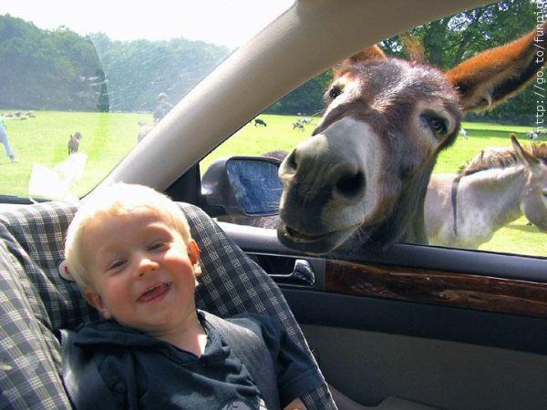 Смешные фото маленьких детей - фото 6