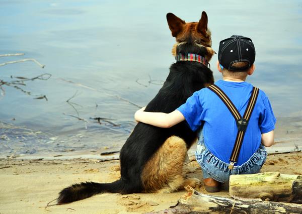 Немецкая овчарка с ребенком