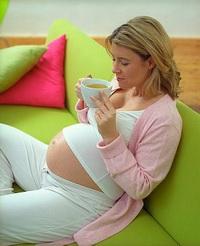 Вредна ли мята беременных