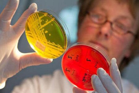 Анализы на золотистый стафилококк