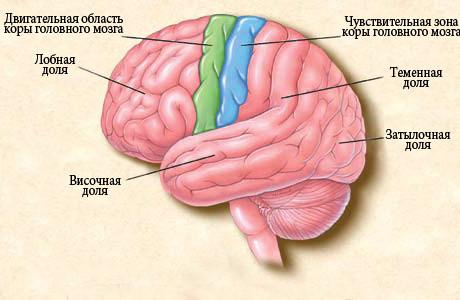 Как проявляется эпилепсия у детей