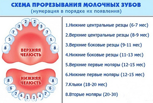 Какие зубы режутся после двух нижних