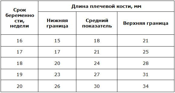 Фетометрия плода: таблицы размеров по неделям, нормы и отклонения