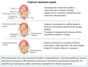 признаки родов
