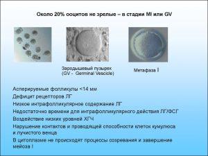 качество яйцеклетки