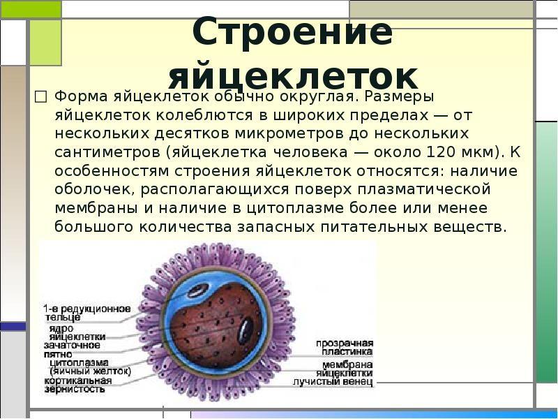 Как протекает климактерическая перестройка